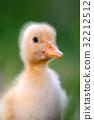 Little duckling on green grass 32212512