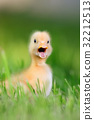 Two little duckling on green grass 32212513