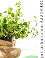 Fresh oregano in a flowerpot 32213981