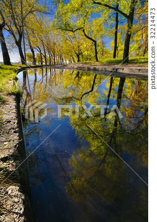 Beautiful reflection of trees in a puddle 32214473