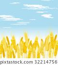 小麥 小麥地 豐收 32214756