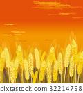 小麥地 小麥 日落 32214758
