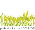 小麥 小麥地 幼枝 32214759