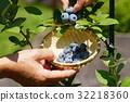 블루 베리, 수확, 과일 32218360