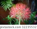 红色 红 花朵 32235532
