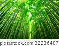 Bamboo forest of Arashiyama near Kyoto, Japan 32236407
