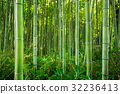 Bamboo forest of Arashiyama near Kyoto, Japan 32236413