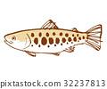 櫻花鉤吻鮭 水彩 水彩畫 32237813