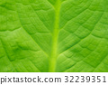 fresh green leaf texture  leaves in nature 32239351