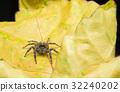 蜘蛛 树叶 亲密 32240202