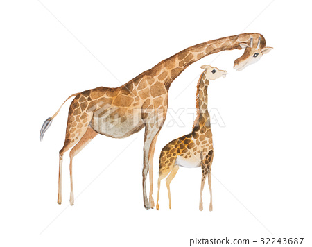 Watercolor illustration of giraffe mother and baby 32243687