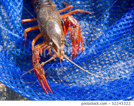 Crayfish, getaway ... 32245322