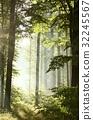 Rising sun enters misty deciduous forest  32245567