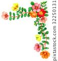 frame, portulaca, portulaca grandiflora 32250131