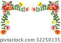 frame, portulaca, portulaca grandiflora 32250135