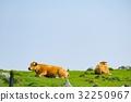 graze, grazing, pasturage 32250967