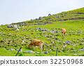 shikoku, karst, grass 32250968
