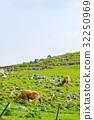 shikoku, karst, grass 32250969