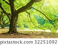 公園樹 32251092