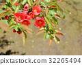 Blurred flowers 32265494