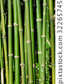Bamboo forest 32265745