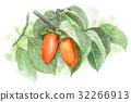 japanese persimmon, kaki, fruit 32266913