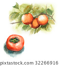 Persimmon tree and fruit 32266916