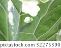 캐터필라 애벌레 유기농 채소 32275390