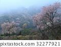 หมอก,ดอกซากุระบาน,ซากุระบาน 32277921