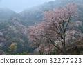 หมอก,ดอกซากุระบาน,ซากุระบาน 32277923