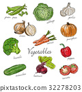 Types of fresh vegetables with description 32278203