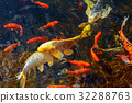 Colorful decorative fish float an artificial pond 32288763