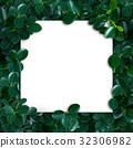 โครงงาน,ใบไม้,ธรรมชาติ 32306982