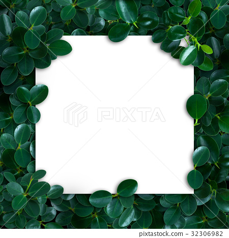 Nature layout made of tropical leaves with paper 32306982