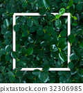 layout,leaves,nature 32306985