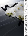 蝴蝶兰 花朵 花卉 32310809