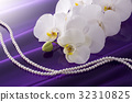 蝴蝶兰 花朵 花卉 32310825