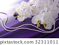 蝴蝶兰 花朵 花卉 32311011