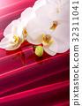 蝴蝶兰 花朵 花卉 32311041