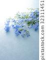 飞燕草 花朵 花卉 32311451