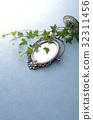 鏡子 常春藤 室內盆栽 32311456