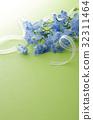 飞燕草 花朵 花卉 32311464