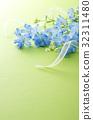 飞燕草 花朵 花卉 32311480