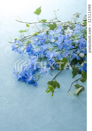 飛燕草 花朵 花 32311499