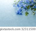飛燕草 花朵 花 32311500