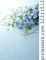 飛燕草 花朵 花 32311513