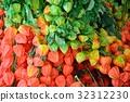 꽈리, 식물, 접사 32312230
