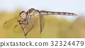 A close-up of a beautiful dragonfly 32324479