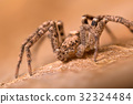 A beautiful spider 32324484