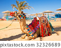 Camel resting on the beach of Hurghada, Egypt 32326689